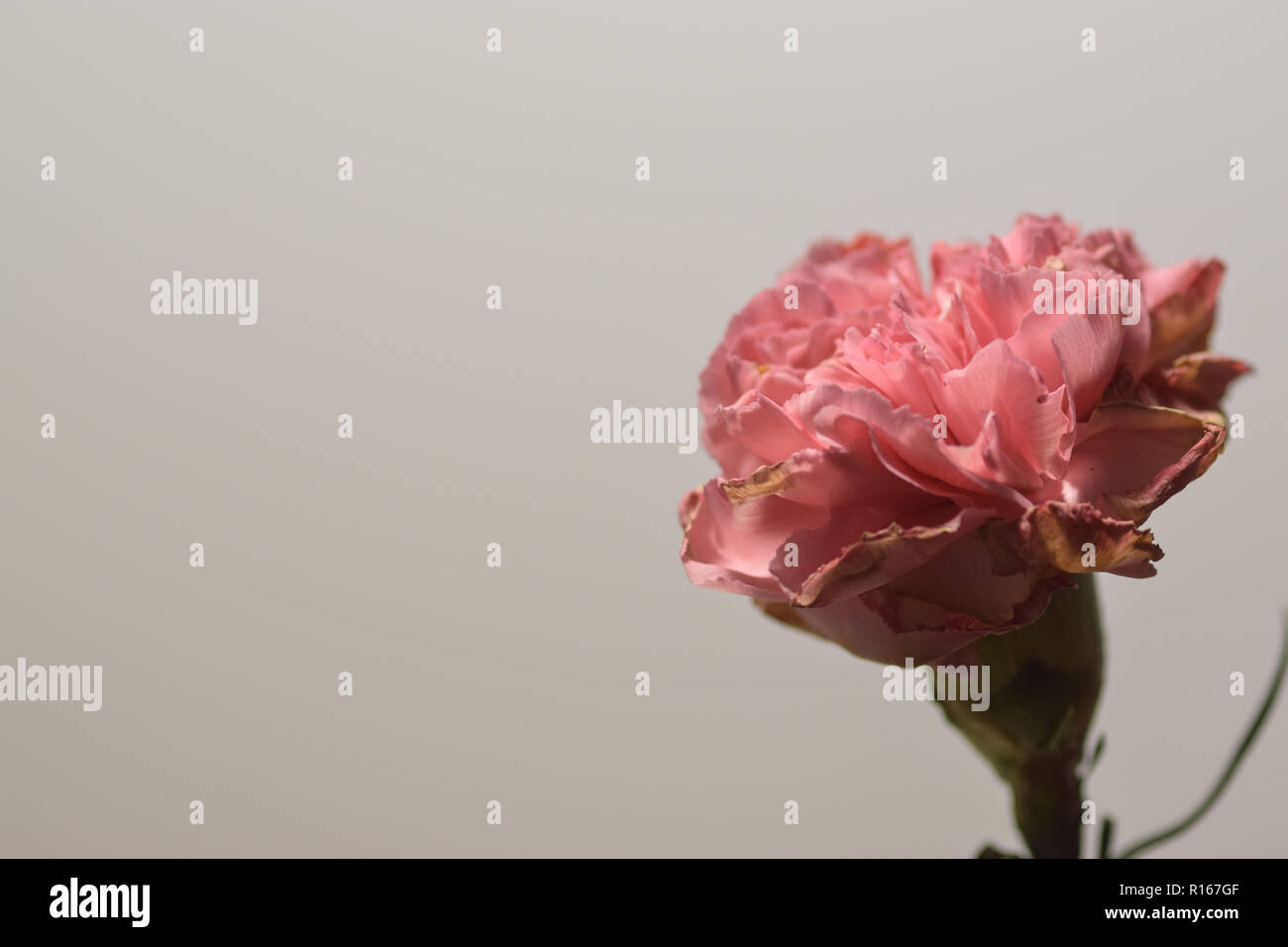 Floral Desktop Immagini Floral Desktop Fotos Stock Alamy