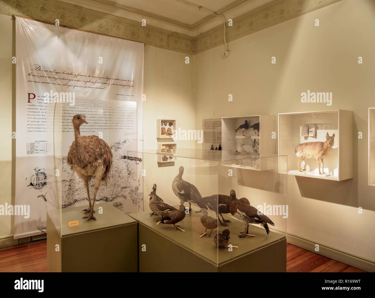 Pujol Chalet, di scienze naturali e Museo Oceanografico, interno, Puerto Madryn, l'Insediamento gallese, Chubut Provincia Immagini Stock