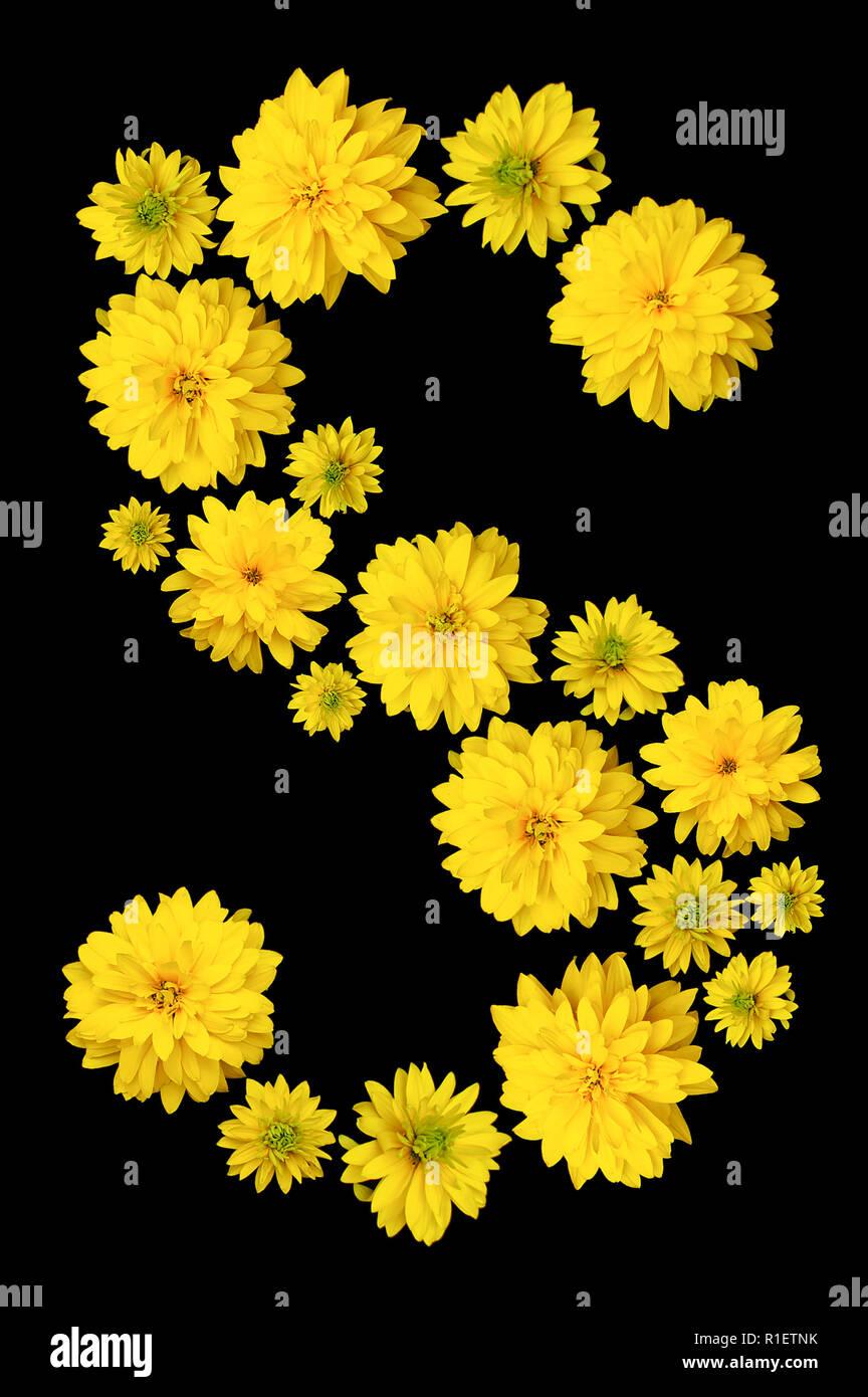Fiori Con La S.Le Gemme Del Giallo Fiore Heliopsis Sono Rivestiti Con La Lettera