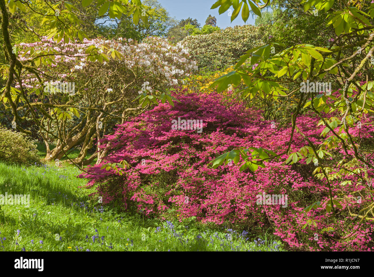 Clyne giardini in fiore blackpill swansea south wales regno