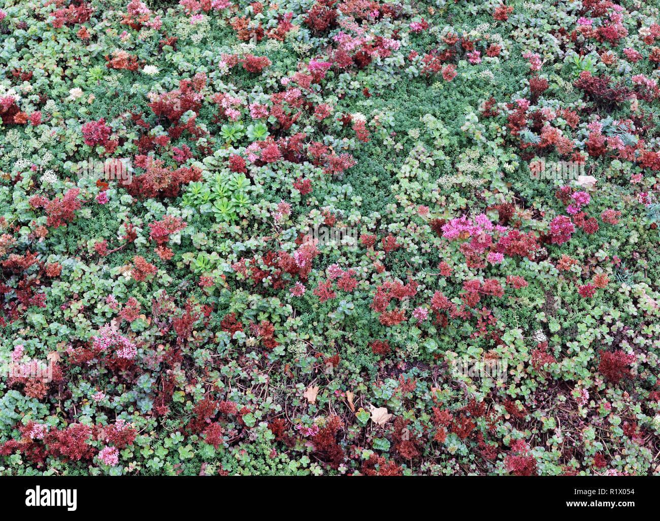 Piante Grasse Da Giardino giardino di piante grasse e fiori vista dall alto 2. collage