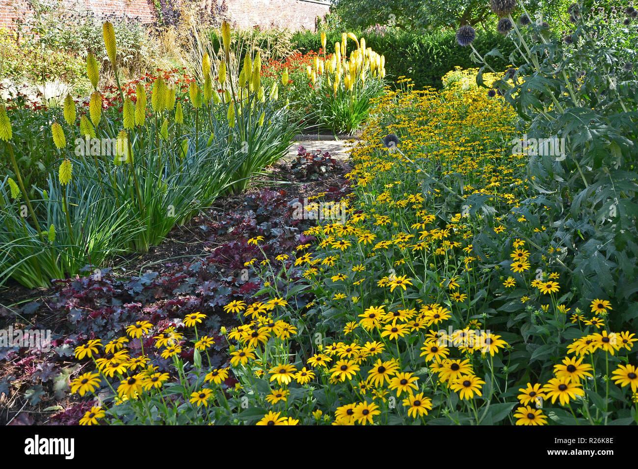 Fiori colorati in frontiera con Kniphofia e Rudbeckia in un paese giardino Foto Stock