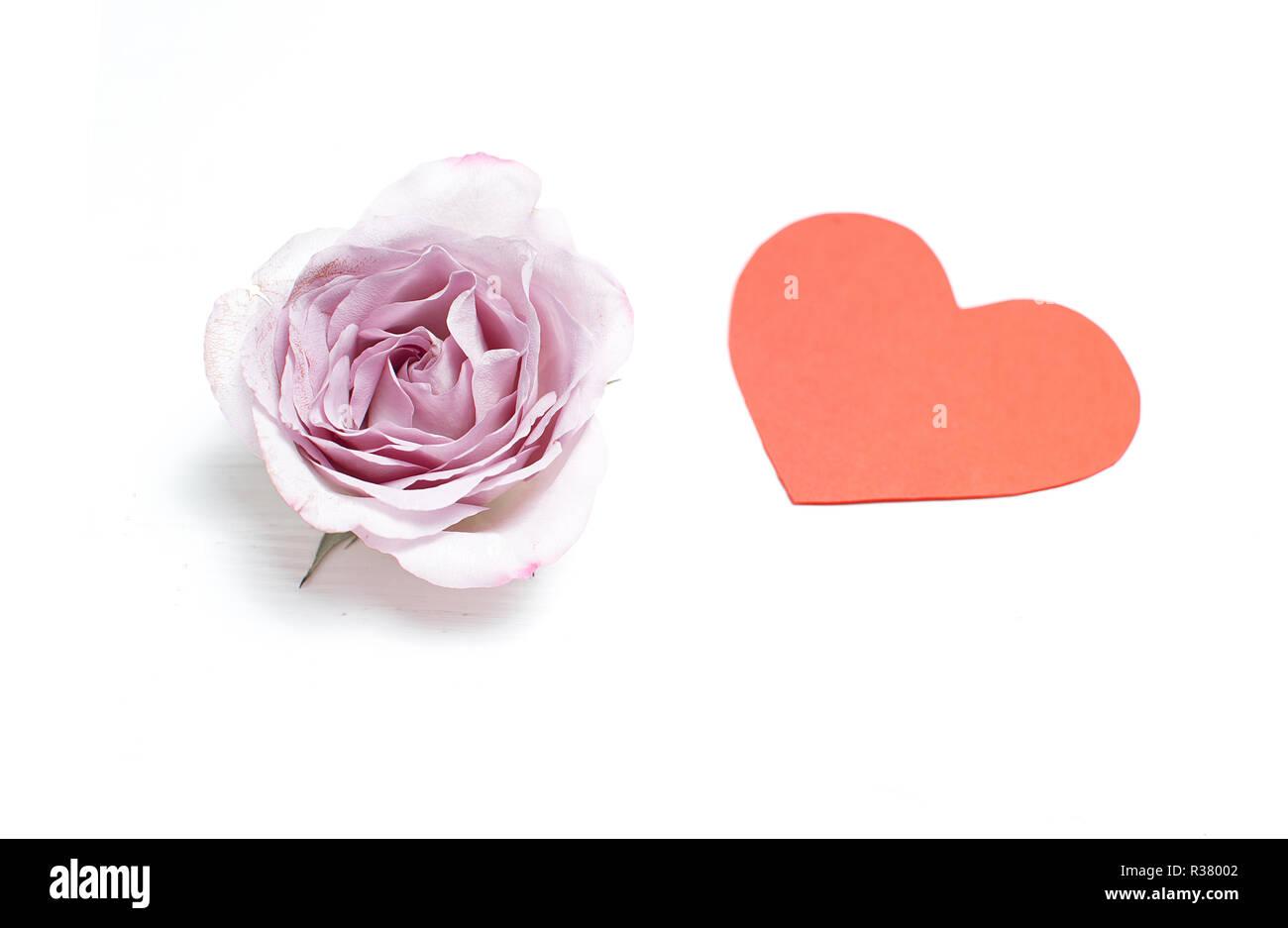Silverston Rosa Su Sfondo Bianco Con Un Cuore Rosso Il Giorno Di