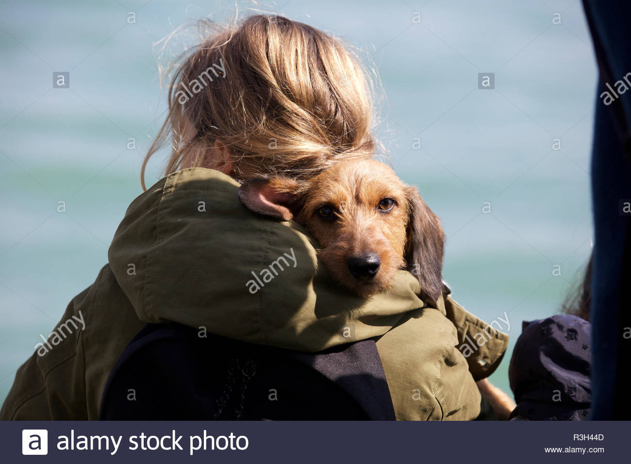 Cane su alle spalle della donna sul traghetto a Venezia il 5 aprile, 2018 (5211) Immagini Stock