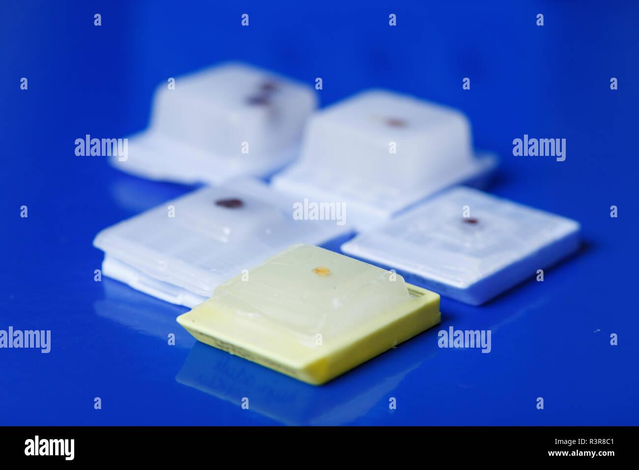 Campioni di microscopia incorporati in paraffina. Immagini Stock