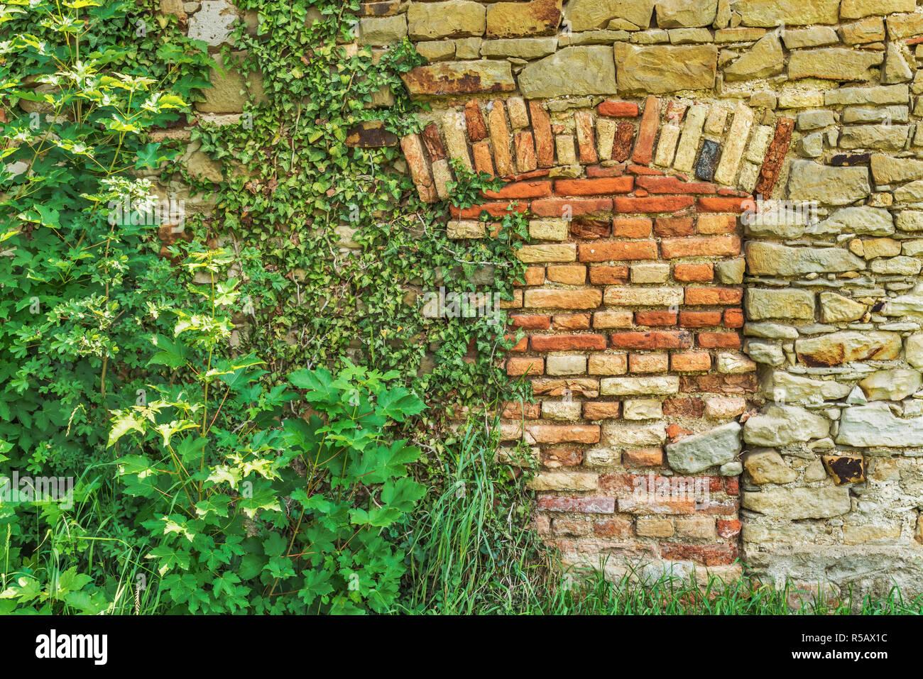 Vista in dettaglio di un muro di mattoni, un ingresso è stata murata chiuso. Piante verdi crescere sulla parete. Immagini Stock