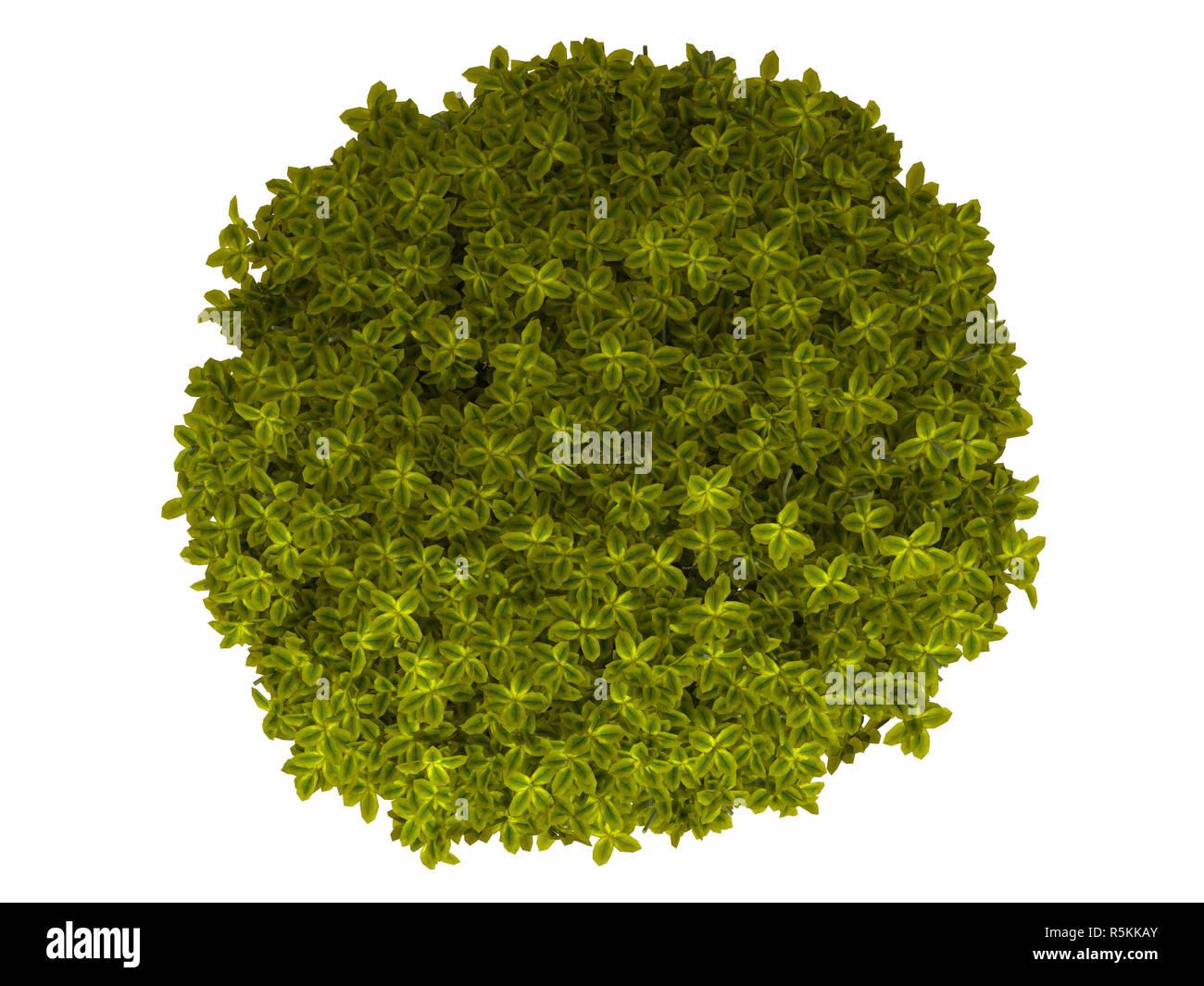 3d bush isolato / arbusto Immagini Stock
