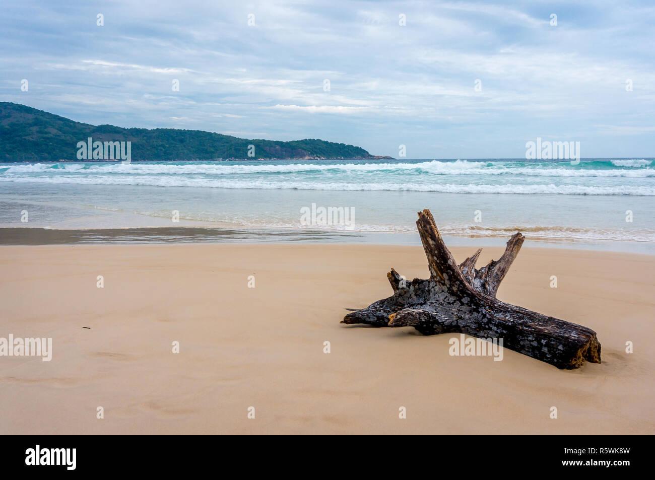 Rotture di tronco di albero sul deserto Lopes Mendes beach, Ilha Grande, Brasile Immagini Stock