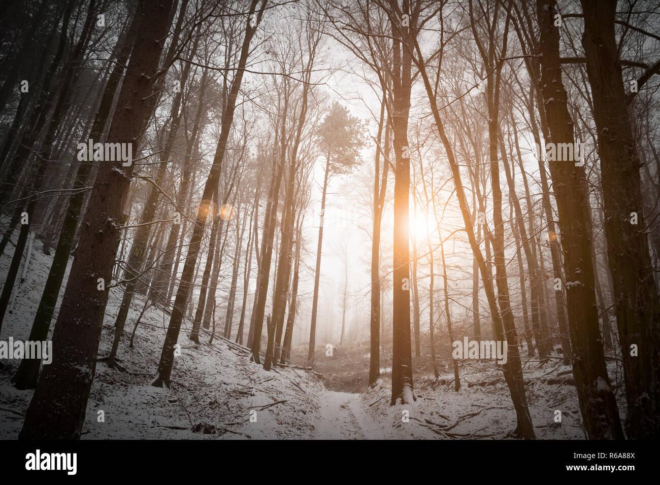 Raggi di sole che brilla in inverno Bosco nebbioso Immagini Stock