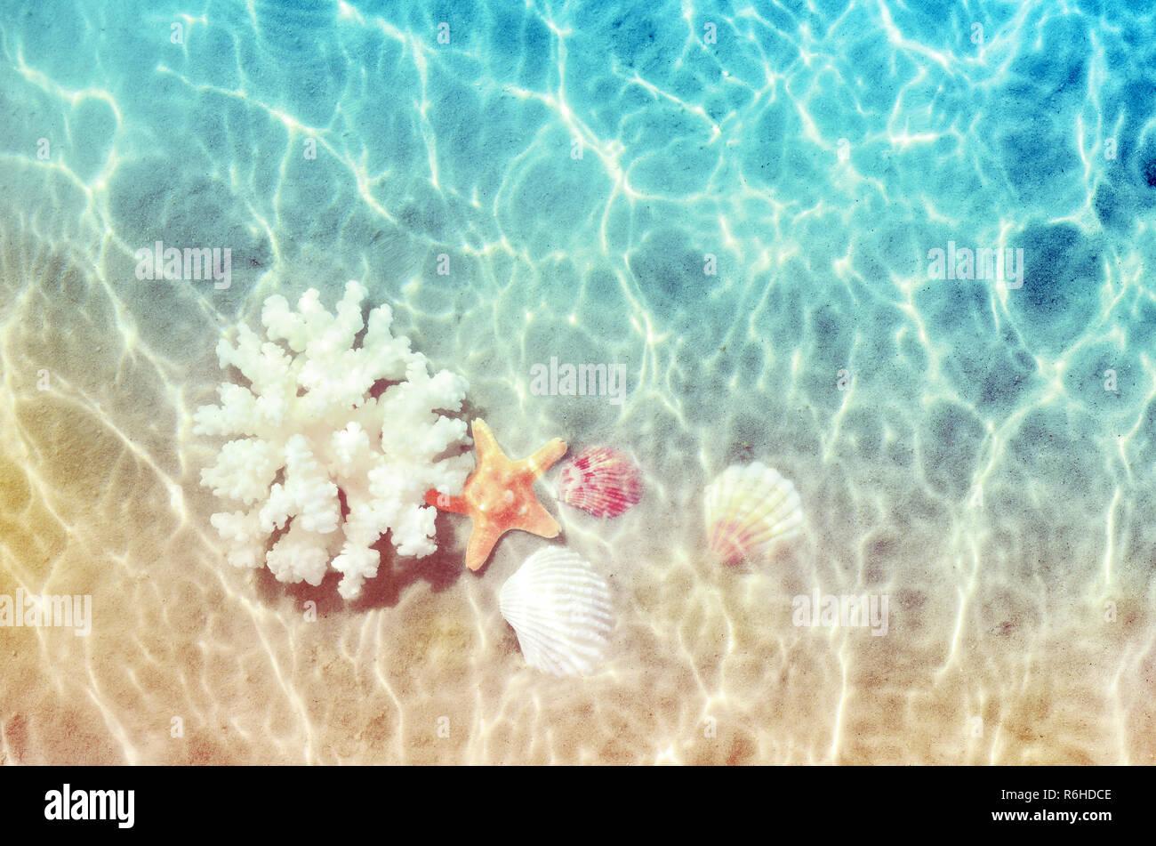 Conchiglie E Coralli Di Mare Sulla Spiaggia Di Estate In Acqua Di