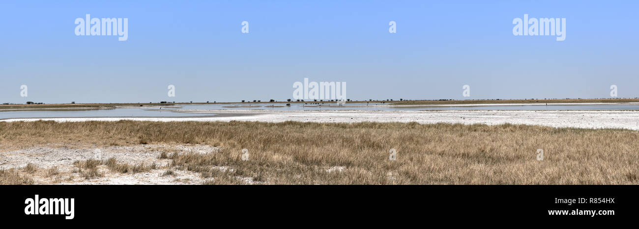Panoramica del Nwetwe, Makgadikgadi Pan in Botswana Immagini Stock