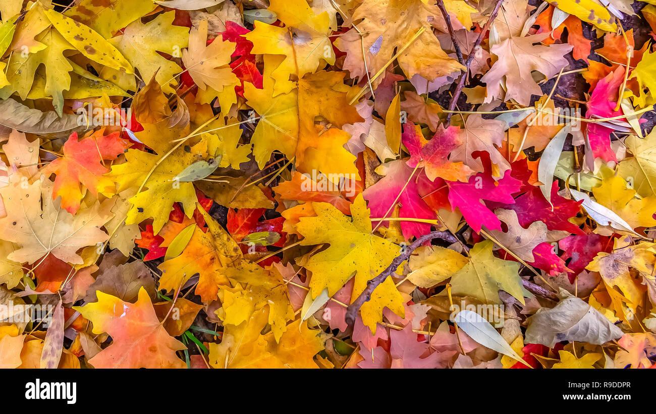 Colori d'autunno lascia sul terreno in Salt Lake City Foto Stock