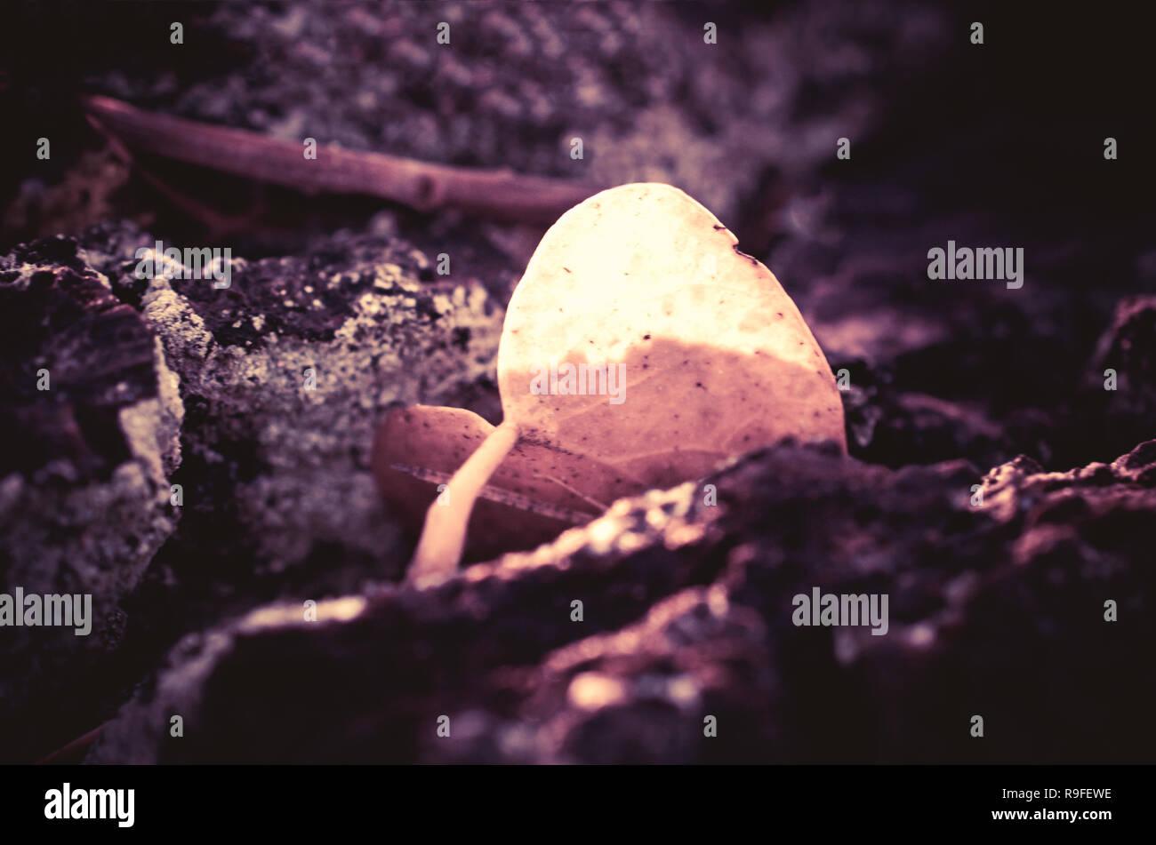 Anta Singola con forma di cuore Foto Stock