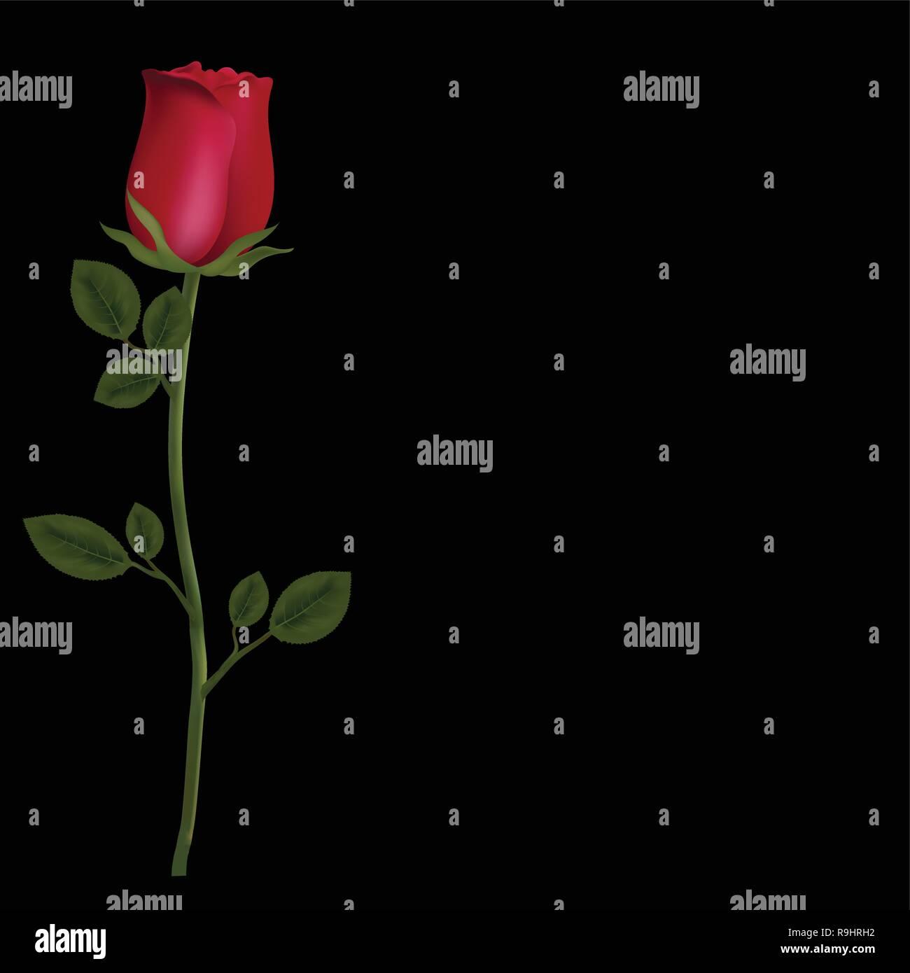 Vettore Foto Realistiche E Molto Dettagliata Di Fiori Rosa Rossa