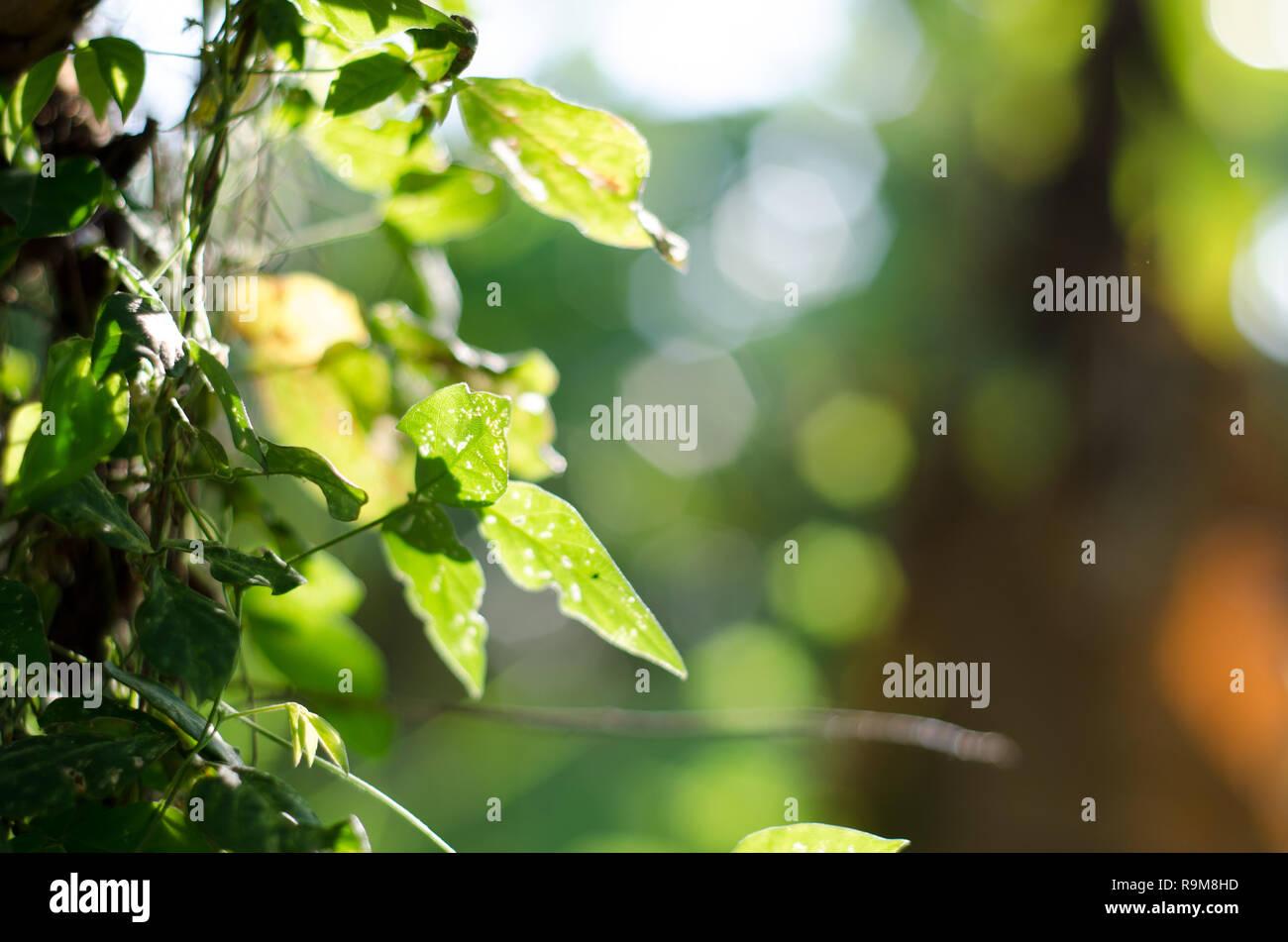 Verde Natura Bokeh Sfondo Luminoso Foto Immagine Stock 229712489