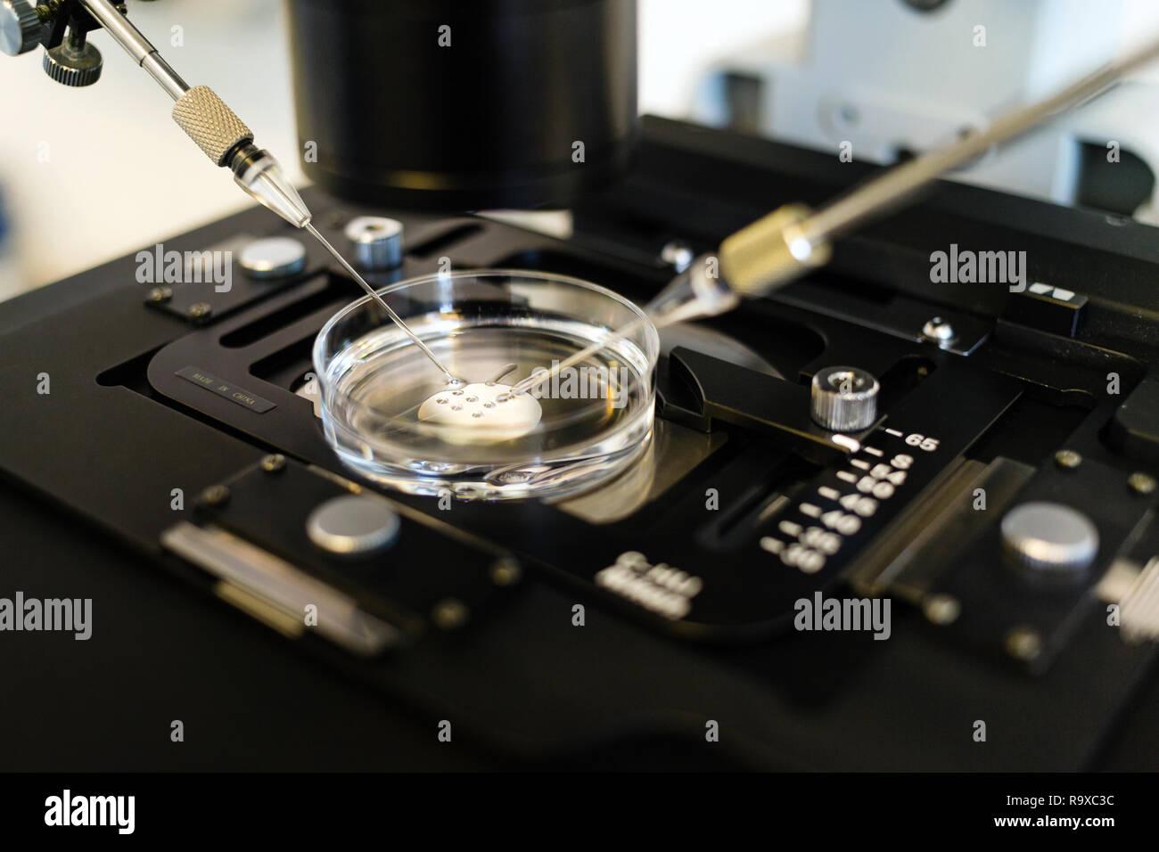 Unter dem mikroskop immagini unter dem mikroskop fotos stock alamy