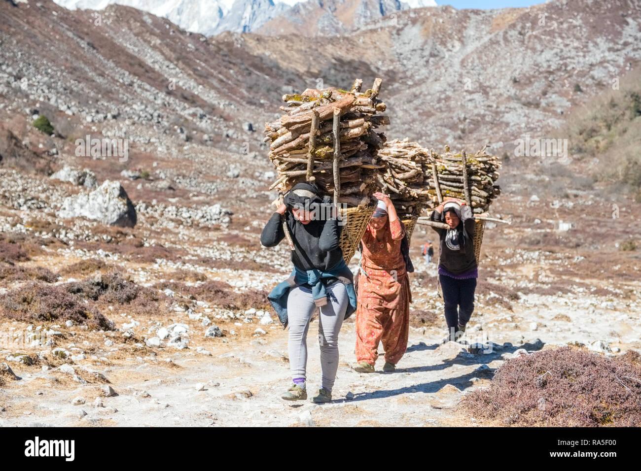 Un gruppo di donne che trasportano carichi pesanti della legna da ardere in Nepal Himalaya Immagini Stock
