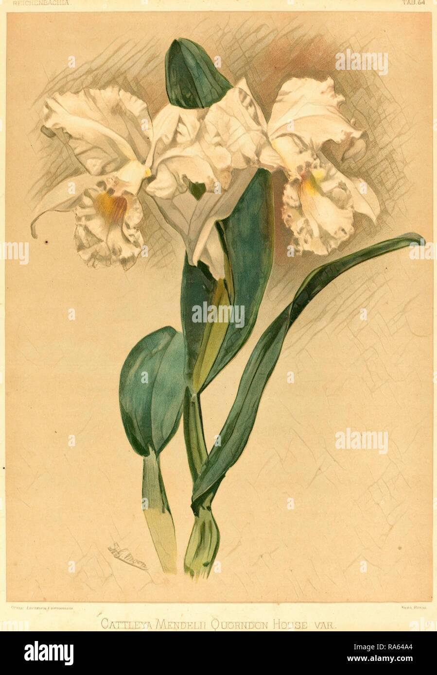 Gustav Leutzsch dopo Henry George Luna (tedesco (?), attivo del XIX secolo), Cattleya Mendelii Quorndon casa Var reinventato Foto Stock