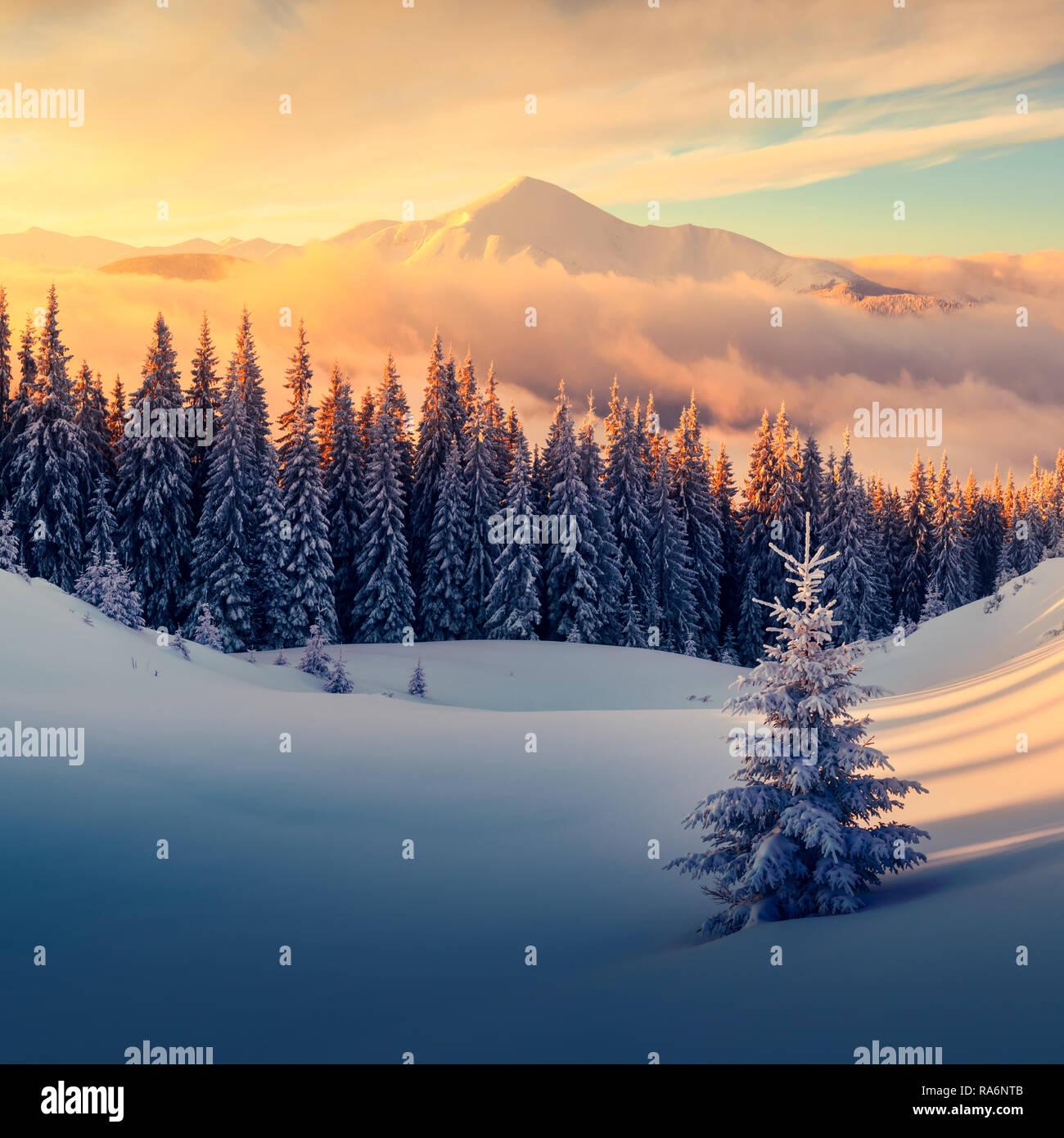 Arancione fantastico paesaggio invernale in montagna innevata incandescente dalla luce del sole. Drammatica scena invernale con alberi innevati. Vacanze di Natale concetto. Carpazi montagna, Ucraina, Europa Foto Stock