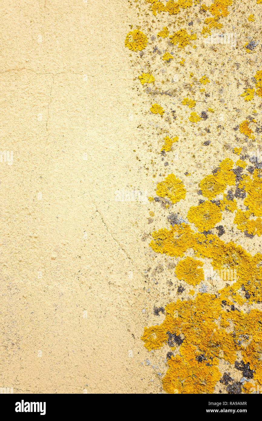 Parete con il lichen in close-up. Immagini Stock