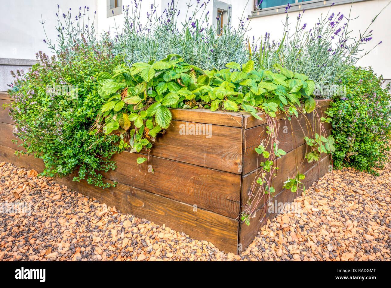 Coltivare In Casa Piante Aromatiche razziò letti in un giardino urbano la coltivazione di piante