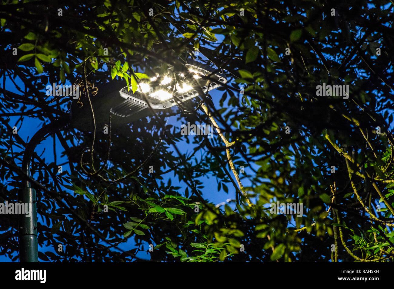 Illuminazione stradale a LED antiriflesso e ad alta intensità luminosa della distribuzione luminosa sul fogliame, lambertiana distribuzione della luce proveniente dal LED di chip esposto il modulo lampada Immagini Stock