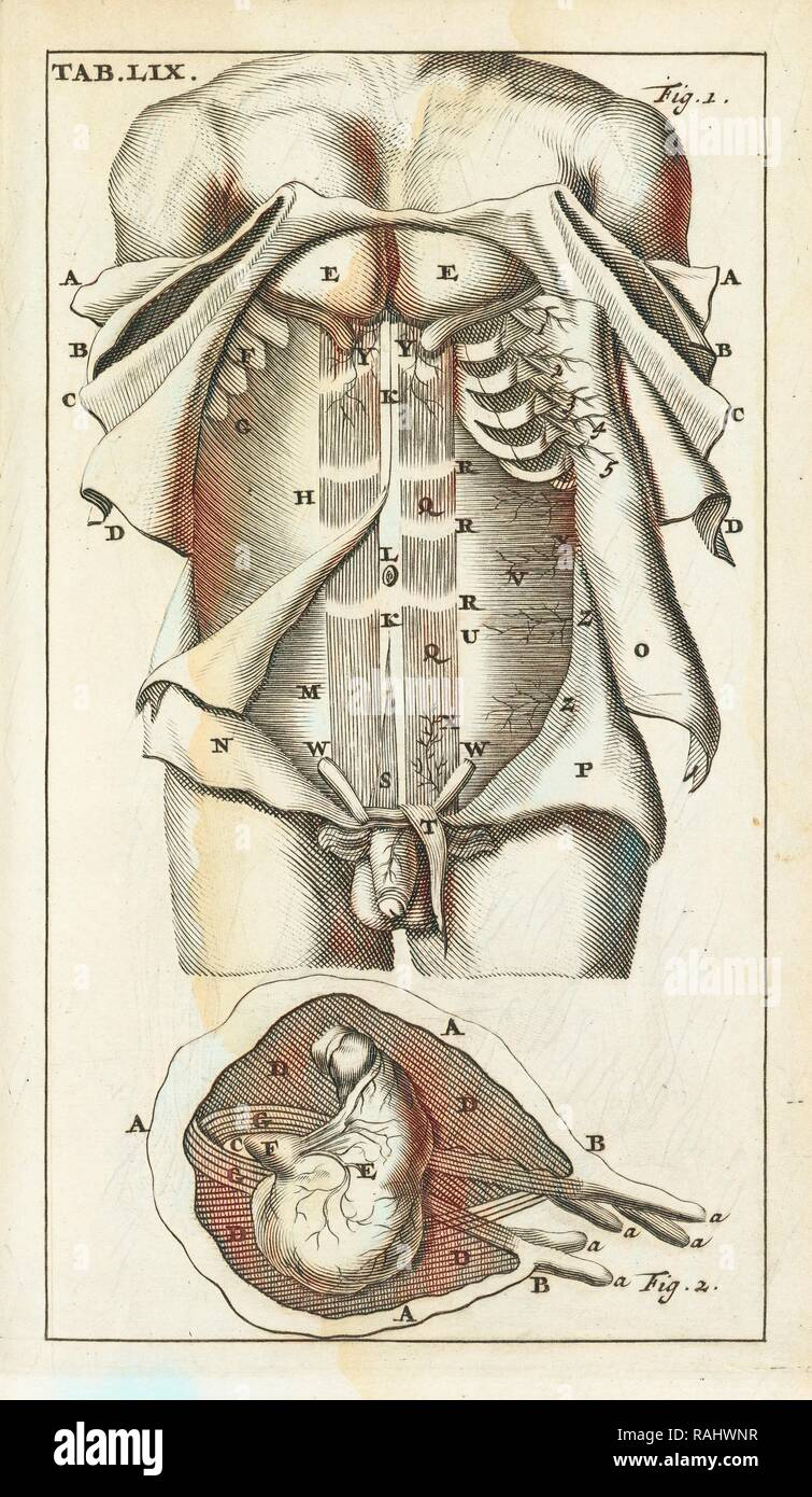 Scheda. LIX, Steph. Blancardi Anatomia reformata, sive, Concinna corporis humani dissectio, ad mentem neotericorum reinventato Immagini Stock