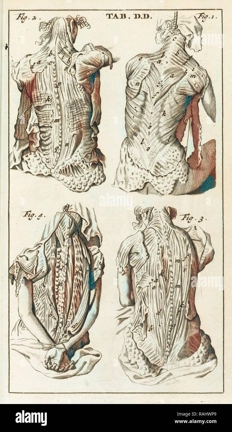 Scheda. DD, Steph. Blancardi Anatomia reformata, sive, Concinna corporis humani dissectio, ad mentem neotericorum reinventato Immagini Stock