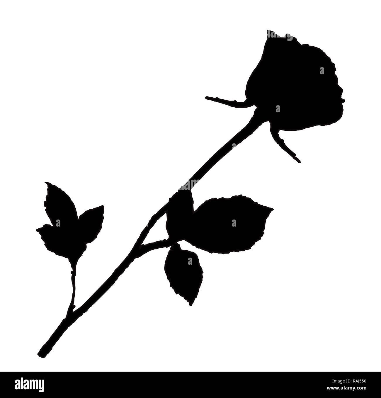 Silhouette nera di rose fiore isolato su sfondo bianco. Bella bocciolo di rosa a gambo lungo. Illustrazione monocromatica, segno, simbolo, clip art fo Immagini Stock