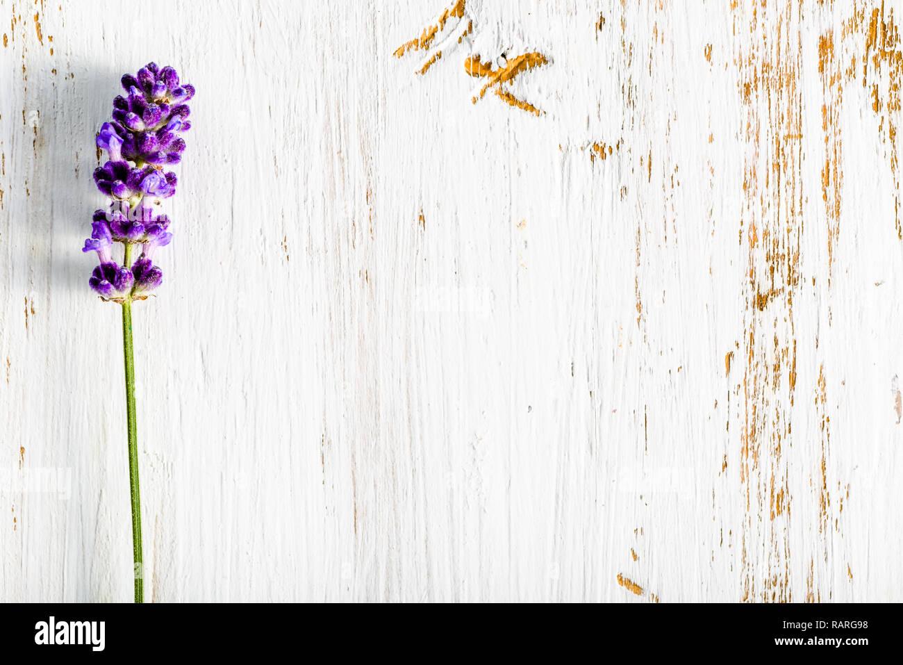 Fiori Di Lavanda Su Sfondo Di Legno Motivo Floreale In Bianco