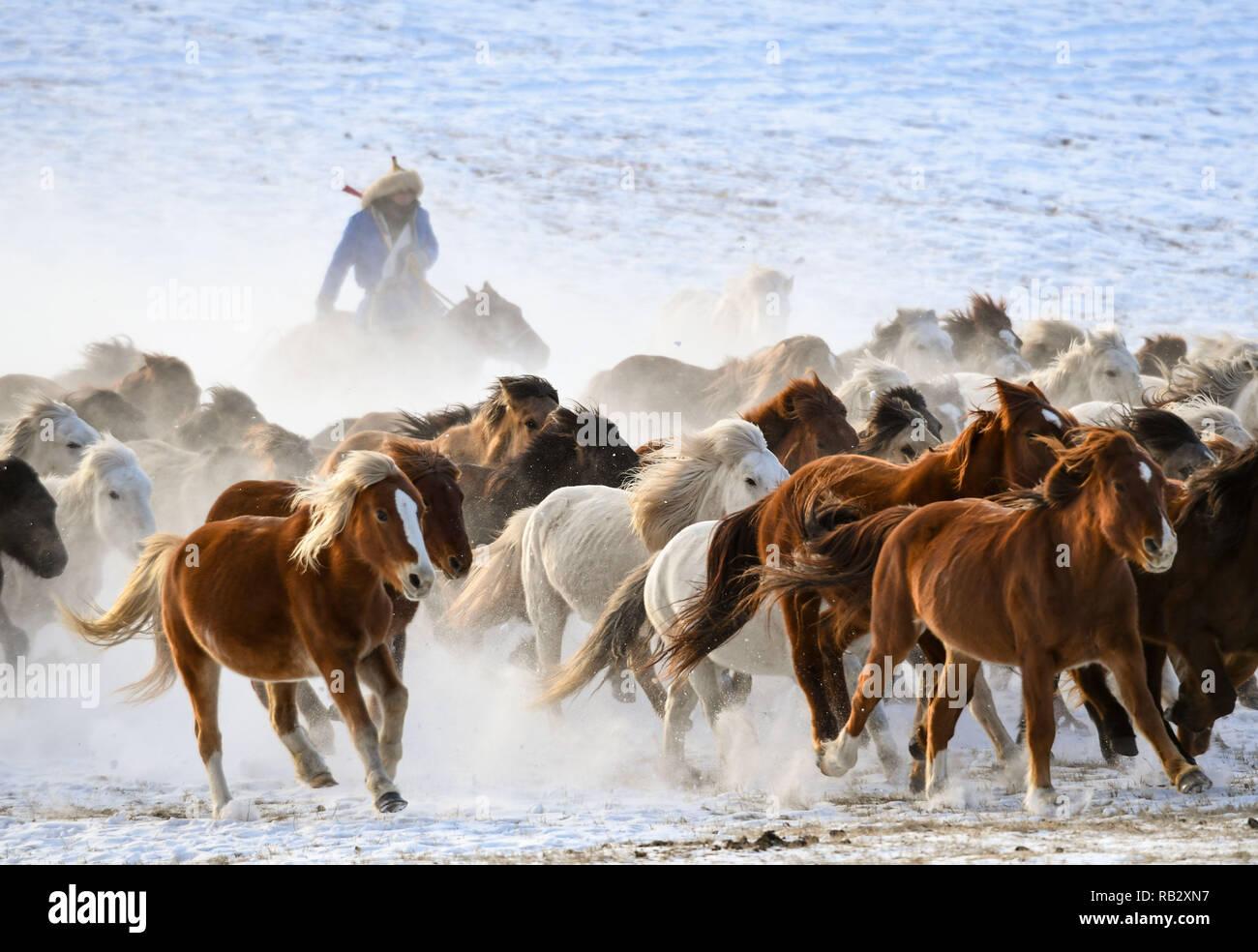 Chifeng, la Cina della Mongolia Interna Regione Autonoma. Il 6 gennaio, 2019. Una unità di pastore cavalli sulla neve-coperta di pascoli nel banner Hexigten di Chifeng City, a nord della Cina di Mongolia Interna Regione Autonoma, Gennaio 6, 2019. Mongolia Interna saluta un picco stagionale del turismo in inverno di recente. Credito: Peng Yuan/Xinhua/Alamy Live News Immagini Stock