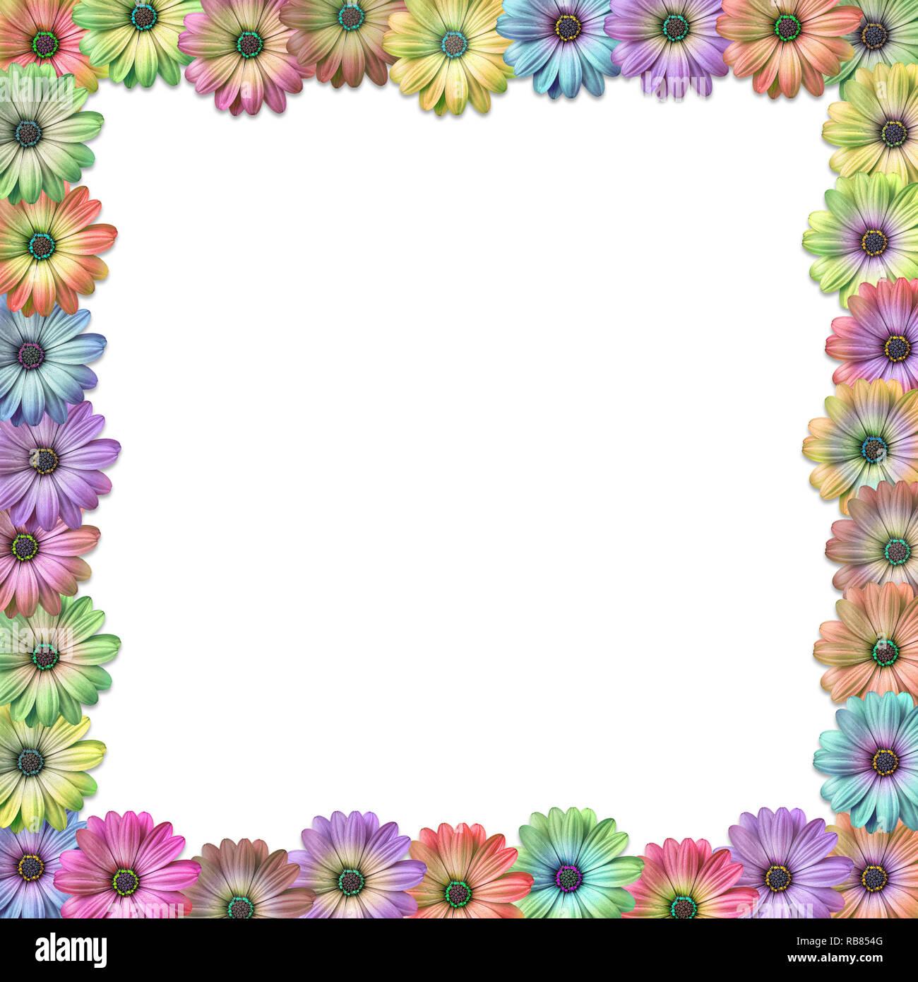 Con sfondo colorato daisy come flower confine telaio dello sfondo Foto Stock