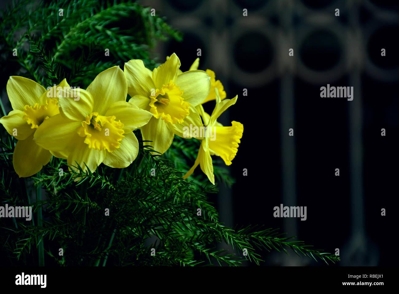 Fiori Giallo Verdognoli A Grappolo.Giallo Narciso Narcissus Poeticus Grappolo Di Primavera