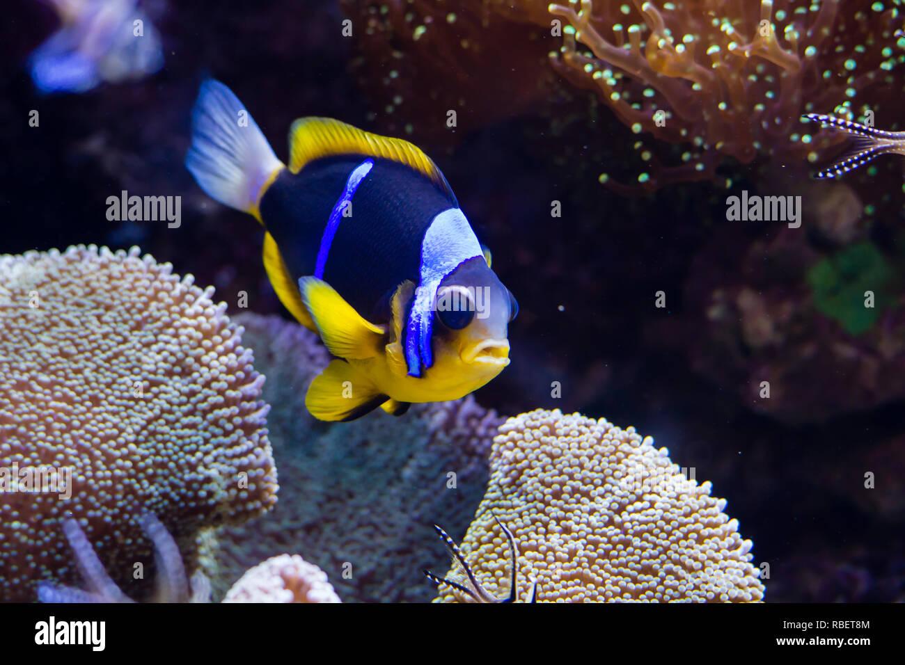 datazione pesci femmina