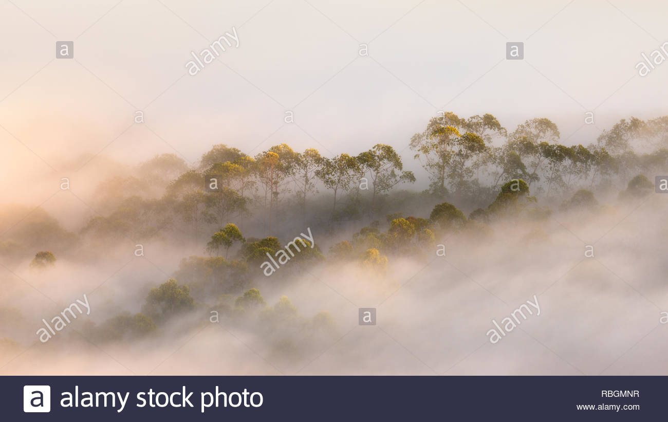 Onirico angolo di alta vista di pesante velatura passando attraverso gli alberi Immagini Stock