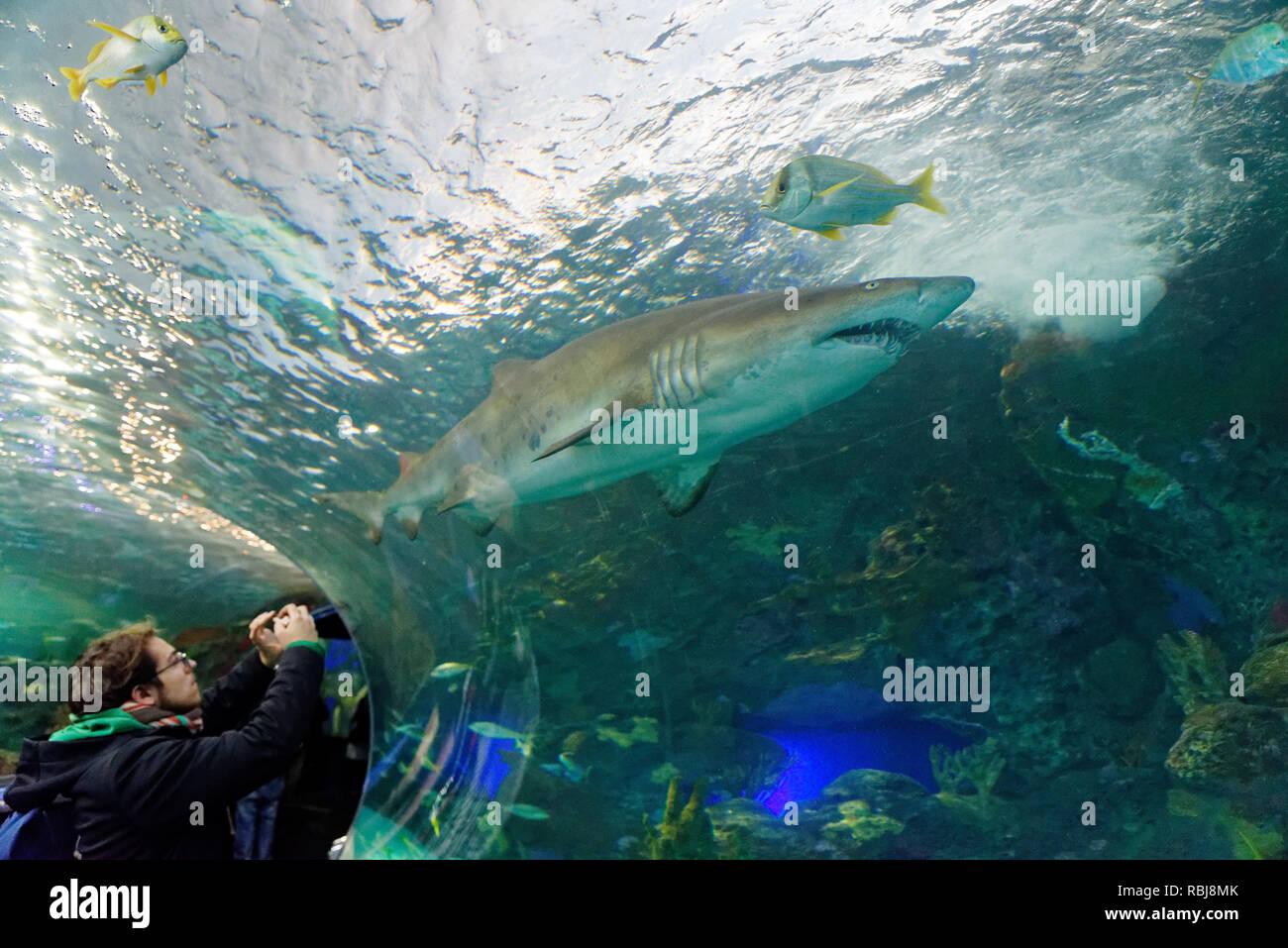 Sito di incontri presenti sul serbatoio di squalo