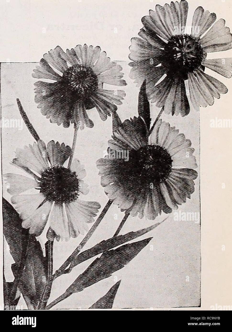 Piante Da Giardino Ombroso dreer del catalogo autunno 1932. lampadine (piante