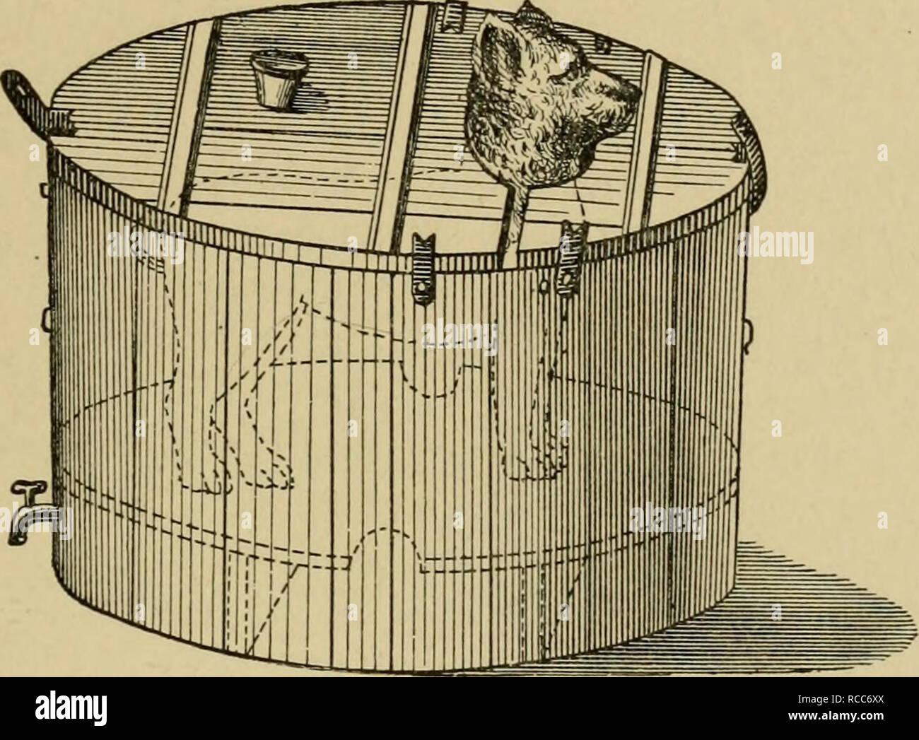 Riempire La Vasca Da Bagno In Inglese : Malattie del cane e del loro trattamento i cani le fratture