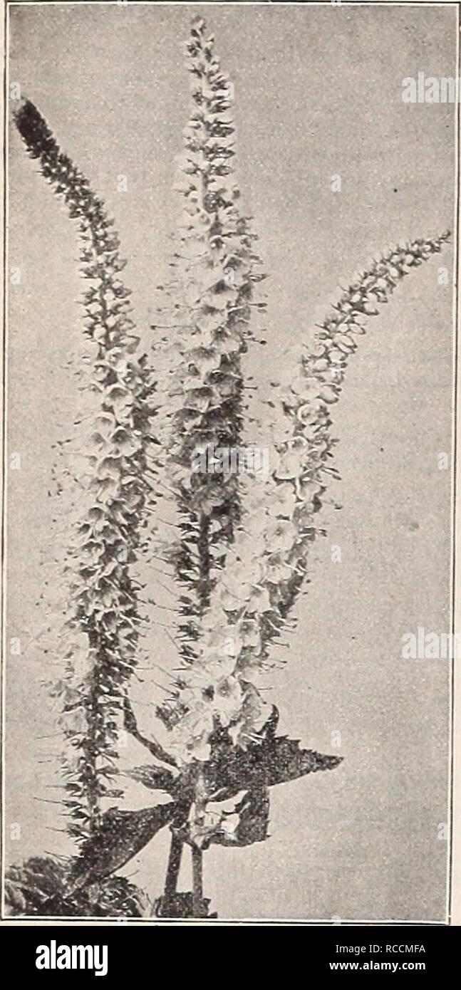 Piante Da Giardino Ombroso dreer's 1909 giardino prenota. cataloghi di sementi; vivaio