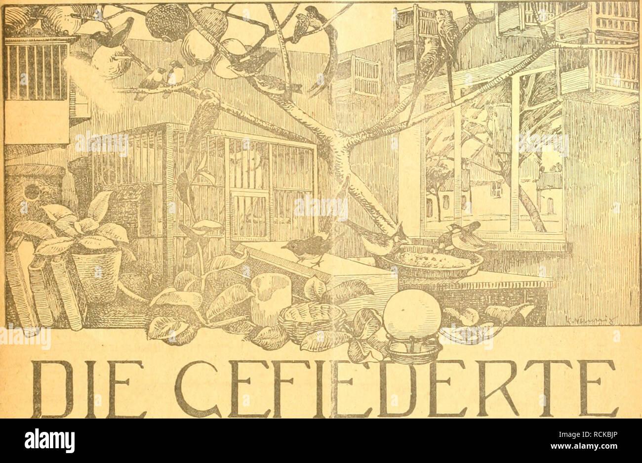 . Die Gefiederte Welt. Gli uccelli. IV M Heft 1. 3. Januar 1918, lahrgang XLVIi.. DIE WELT ccriE ZFJTSCHRIFT FÜR -VOGELLIEBHABER. Begründet von Dr. Karl Ruß. Herausgegeben von Karl Neunzig in Hermsdorf bei Berlin. INHALT: Vogelliebhaberei! Plauderei von J. Biri- , Leipzig. Weitere Beobachtungen von südafrikam poi Lerchen. Von Alfred Weid. holz, Wien. Zur Spatzenfrage. Von H. V. Bottiche i-. Zu den surrogato del- und Nebenfutterfragen. Von A. Adlersparre. Ooethis Beziehungen zur Ornithologie. Walter Von Bacmeister. Kleine IVlltteilungen. - Sprechsaal. - Au., deu Vereinen, - Redaktionsbriefkasten. Abonnetne Foto Stock