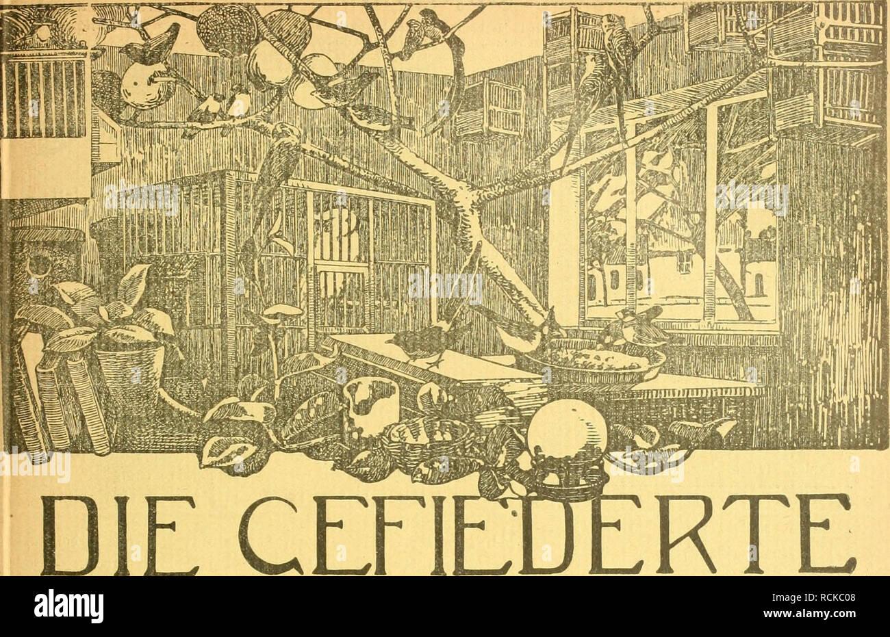 . Die Gefiederte Welt. Gli uccelli. Heft 2. 14. Januar 1915. Jahrgang XLIV.. CEFl DIE WELT WOCHENSCHRIFT FÜl -VOGELLIEBHABER.- Begründet von Dr. Karl Ruß. Herausgegeben von Karl Neunzig in Hermsdorf bei Berlin. INHALT: Die Wachtel und ihre Pflege. Karl von Finck, Neukölbi. (Fortsetzung und Schluß.) Meine Mossambikzeigzucht. Von Josef Porzelt. Dompfaffenzüchtung. Von Friedrich Busse, Dessau. (Fortsetzung.) Jagd und Heimatschutz. Von Dr. Rudolf Korb. Kleine Mitteilungen. - Aus den Vereinen. - Vom Vogelmarkt. - Redaktions- briefkasten. Abonnementspreis vierteljährlich M. 1.50. (13 Nummern mit Abbildung Foto Stock