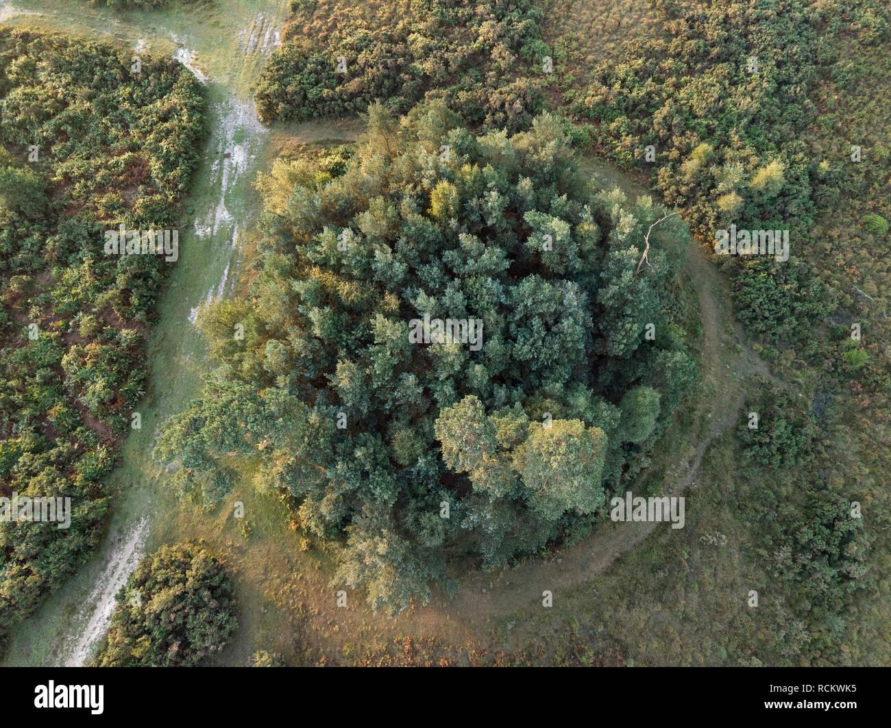 Bellissima alba immagine orizzontale di fuco vista aerea di autunno cadono scena della foresta Foto Stock