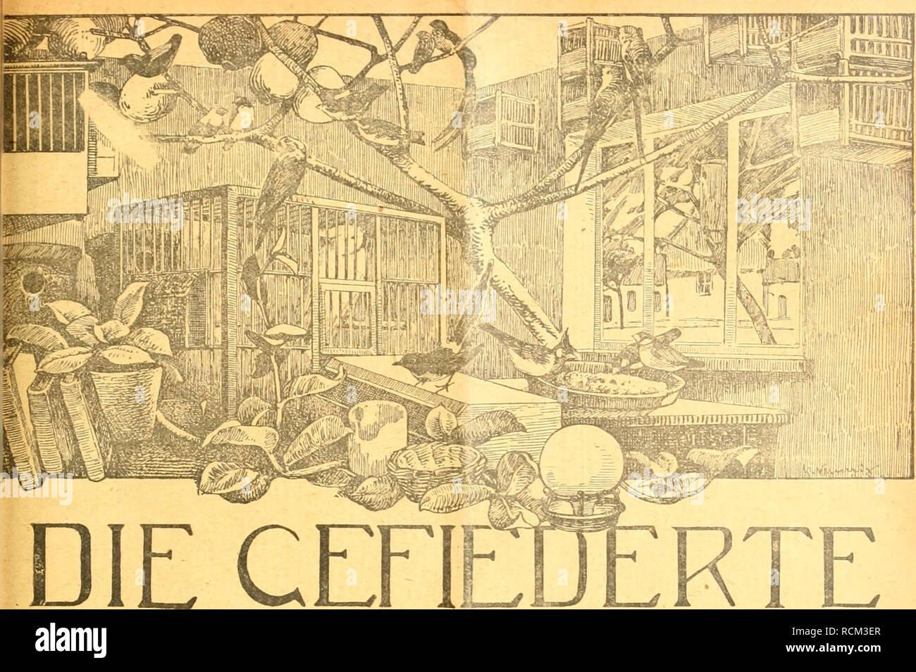 """. Die Gefiederte Welt. Uccelli. ett 23. 5. Dezember 1918. XLVIl Jahrgang. ifflH. WELT RTE Zeitschrift für -VOGELLIEBHABER.- Begründet von Dr. Karl Ruß. Herausgegeben von Karl Neunzig in Hermsdorf bei Berlin- INHALT: OedanWen eines Vogclliebhabers. Von H. Cadura, Swinemünde. Mitteilungen über meine Vogelwelt. Von Kracht, Odessa. (Schluß). Etwas über den Wieserpieper. Von Lothar Oribkowski. Über die Entstehung des deutschen Vogc""""nomi. Von A. Usinger. Elternliebe bei Vögeln. Von Rudolf Steinmetz, Straßburg i. Eis. Kleine Mitteilungin. - Aus den Vereinen. - Redaktionsbrieikasten. Abonnementspreis Foto Stock"""