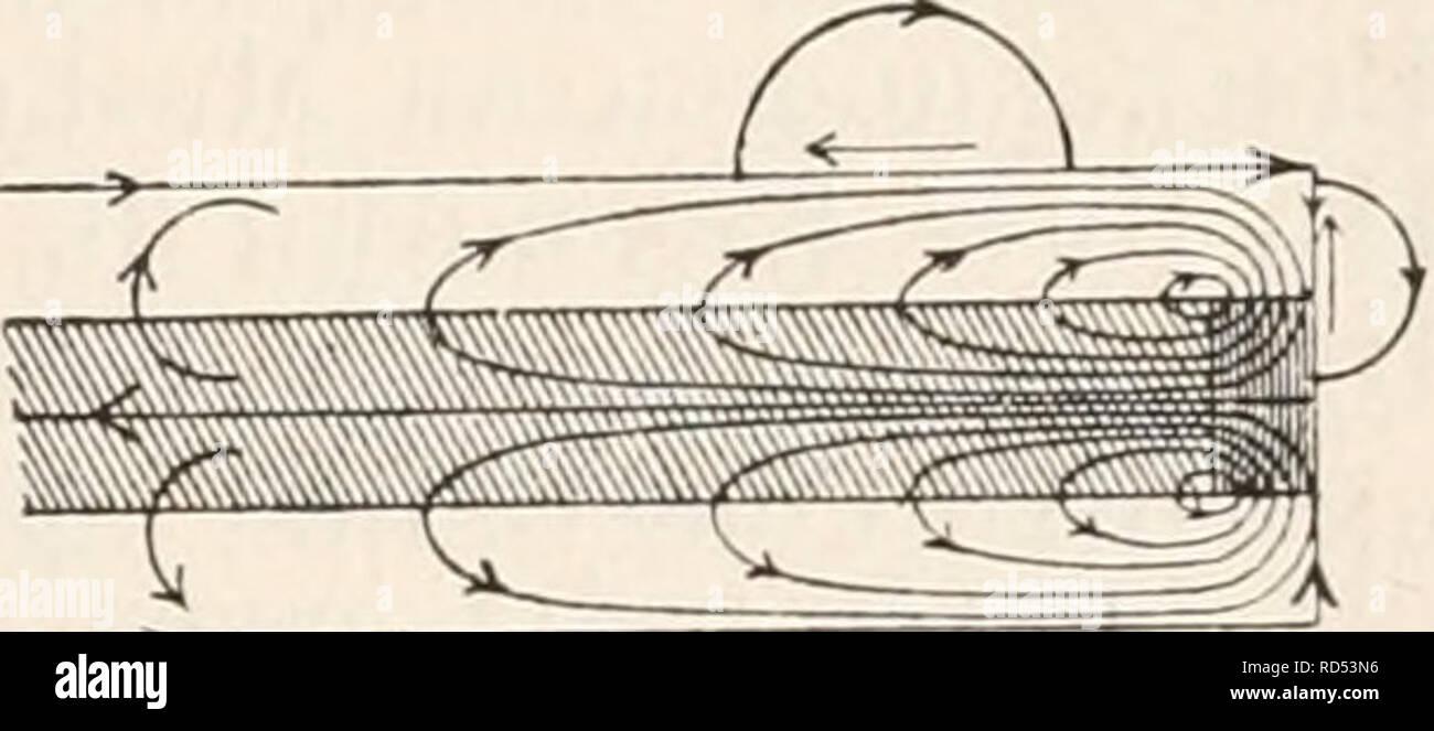 . Elektrophysiologie. . Die elektromotorischen Wirkungen der tendere-ven. 707 Stromstärke und Stromesdauer an der physiologischen Kathode, d. h. un jedem Punkte, wo der Strom aus der Substanz erregbaren austritt, während der Schliessungszeit ein Zustand erhöhter Anspruchsfähigkeit besteht, während das Umgekehrte an der physiologischen anodo der Fall ist, in modo ergiebt sich unmittelbar auch ein Verständniss für die Thatsache der intra- und extrapolar sich ausbreitenden polare-antago- nistischen Erregbarkeitsänderungen eines polarisirten markhaltigen Nerven. Es erklärt sich ferner leicht die auf den ers Foto Stock