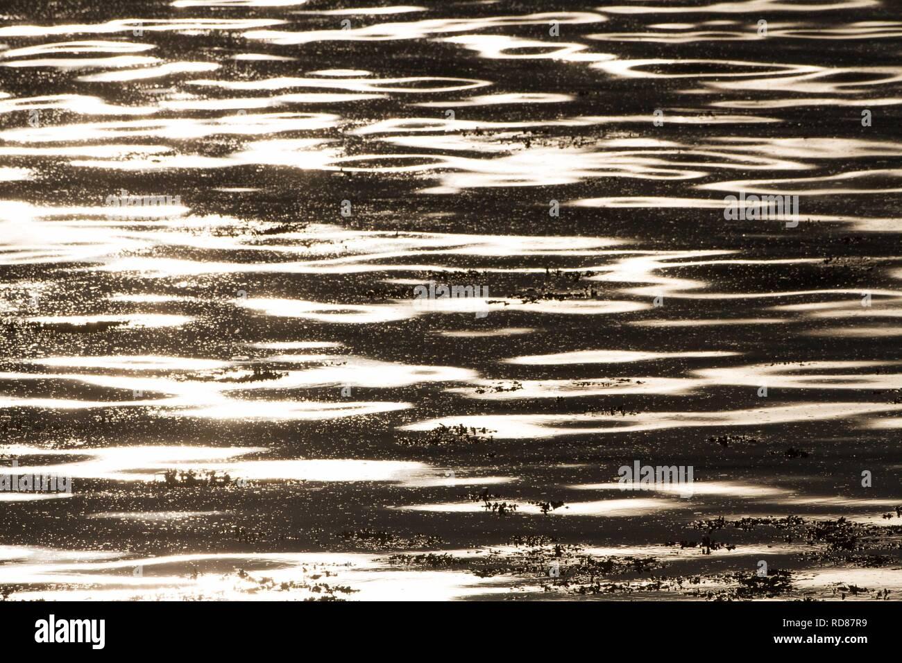 Mare calmo ,solo dagli impianti offshore di Berneray, habitat ideale per piccoli Sterne per alimentare il cicerello ,le specie indicatrici per il cambiamento climatico Foto Stock