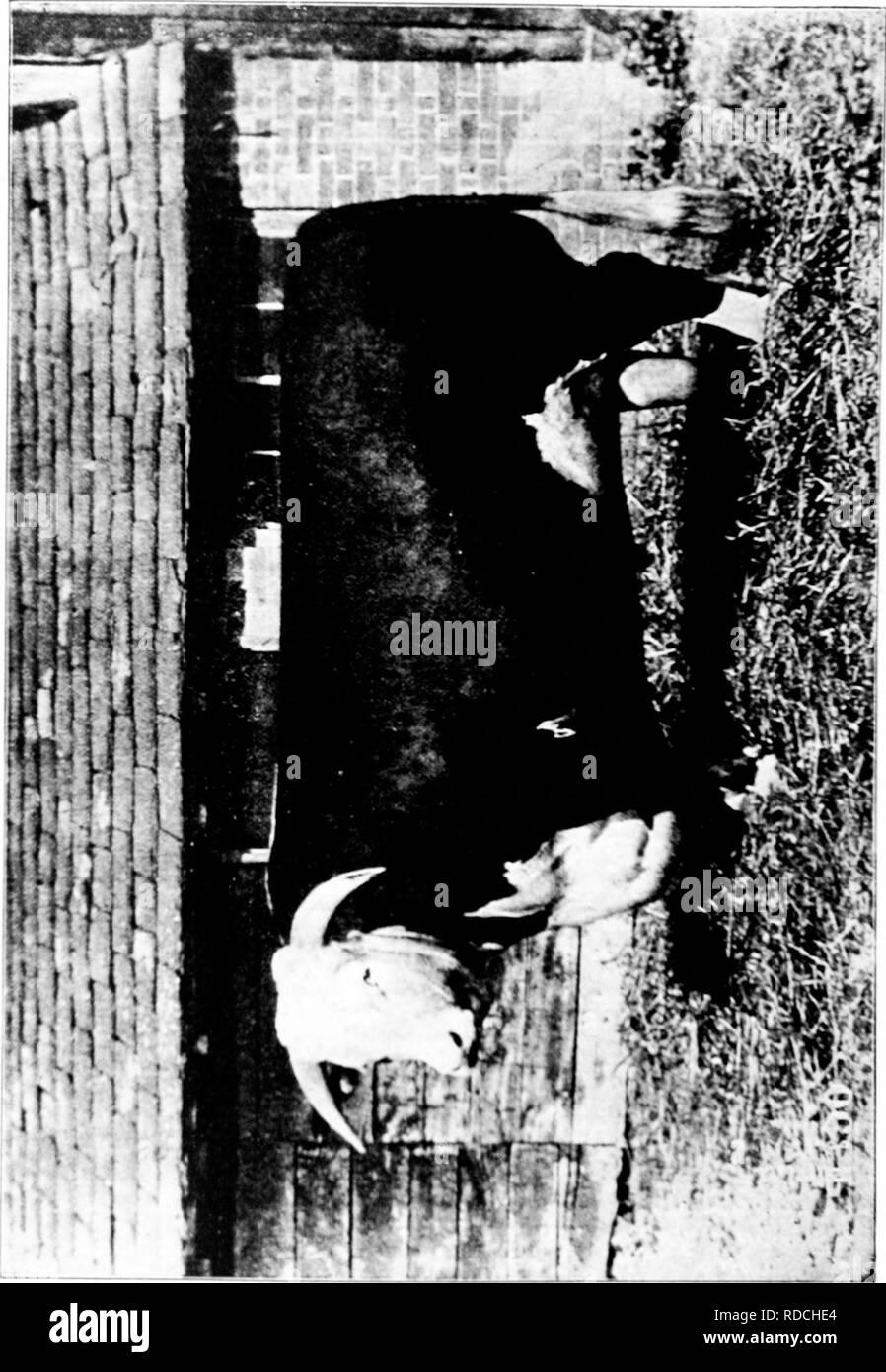 . La storia di Hereford bovini : dimostrato in maniera definitiva la più antica delle razze migliorate . Hereford bestiame. . Si prega di notare che queste immagini vengono estratte dalla pagina sottoposta a scansione di immagini che possono essere state migliorate digitalmente per la leggibilità - Colorazione e aspetto di queste illustrazioni potrebbero non perfettamente assomigliano al lavoro originale. Miller, T. L. (Timothy Lathrop), 1817-1900; Bournemouth, Wm. H. (William H. ). Chillicothe, Mo. : T. F. B. Bournemouth Foto Stock