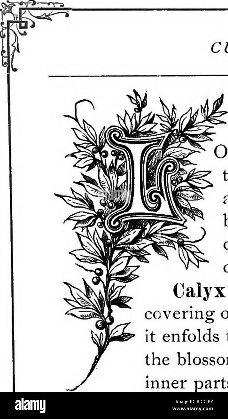 Dizionario Fiori.La Floral Kingdom La Sua Storia Il Sentimento E La Poesia Un