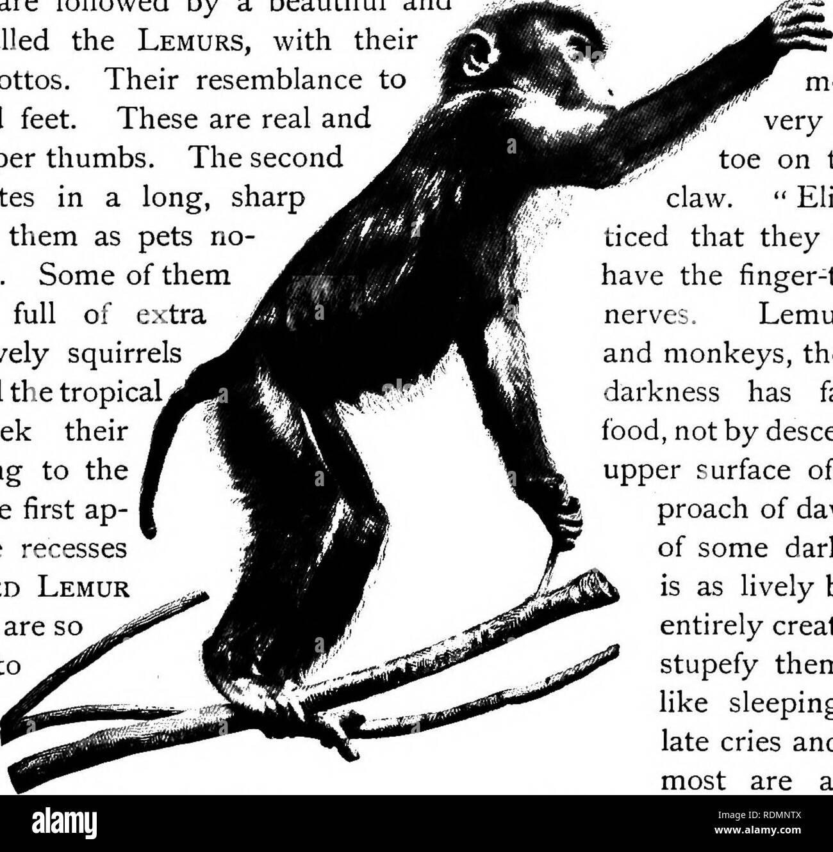 Mammifero Detto Poltrone.Mammiferi Di Altre Terre Mammiferi Scimmie Scimmie E