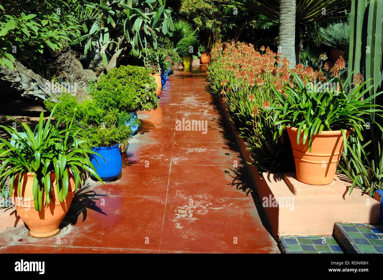 Percorso rosso o Sentiero nel Giardino Majorelle o giardino botanico o di Marrakech Marrakech marocco Foto Stock