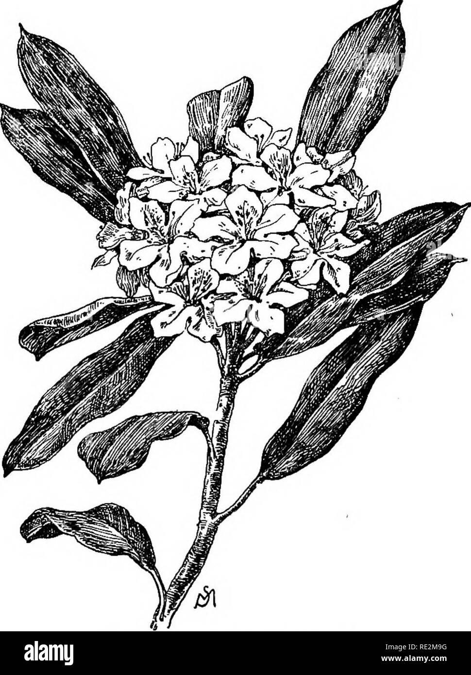 Fiori Giallo Verdognoli.Familiarita Dei Fiori Di Campo E Giardino La Botanica 62